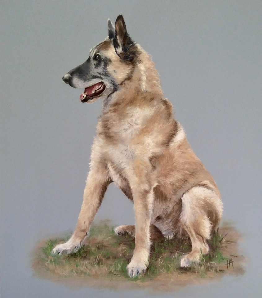 Belgian Shepherd Dog | Pastel Painting